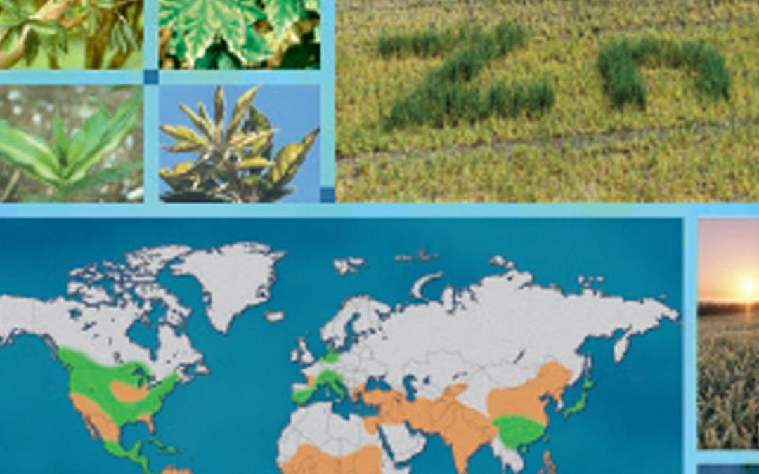 Zinc in Soils and Crop Nutrition